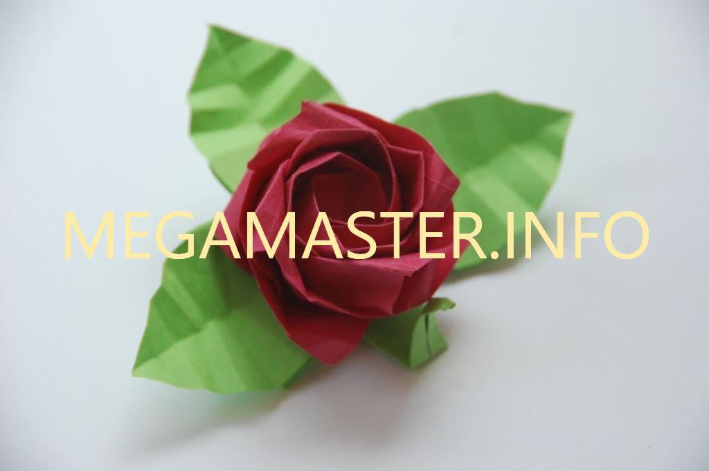 Роза Кавасаки. Готовый вариант.