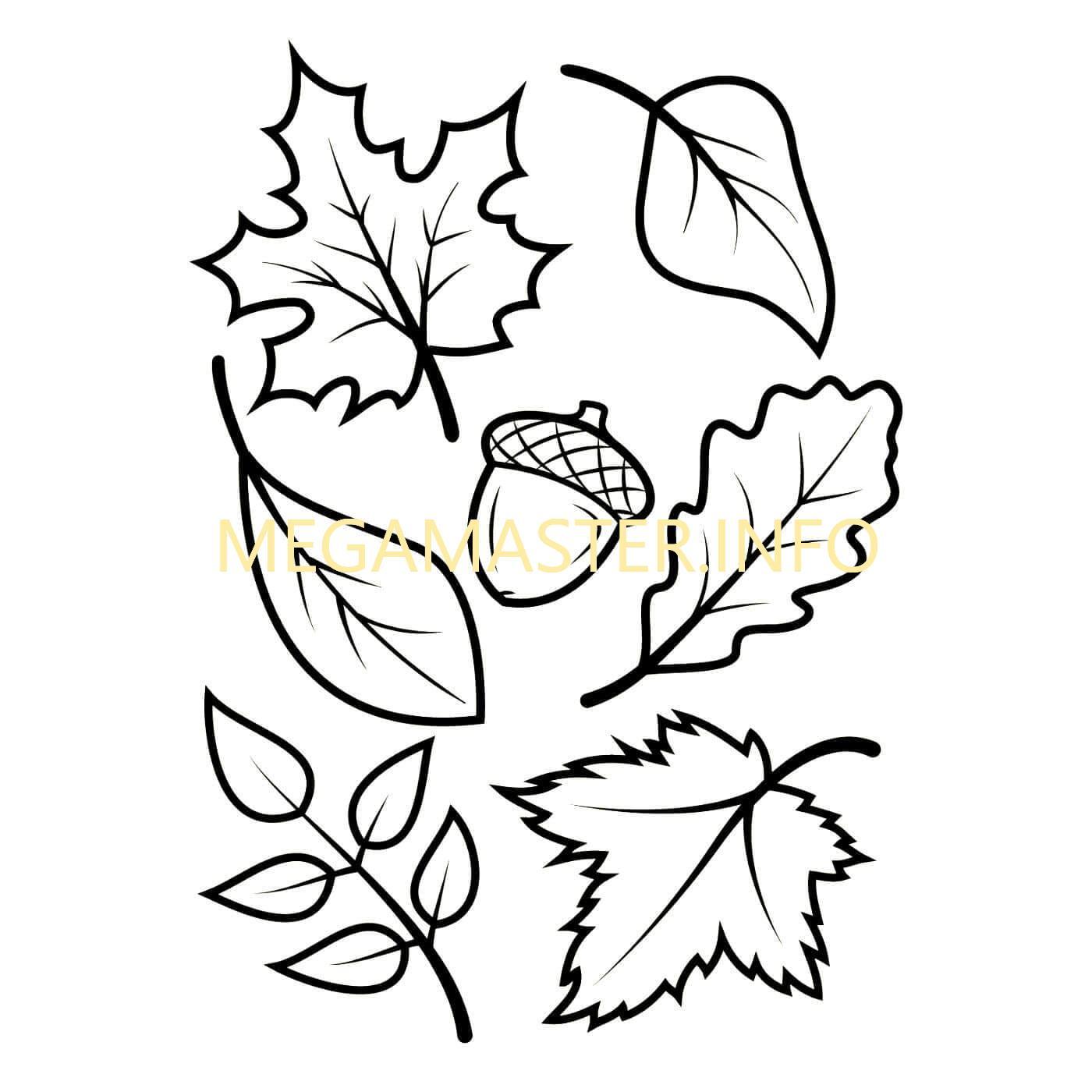 Шаблоны разных листьев