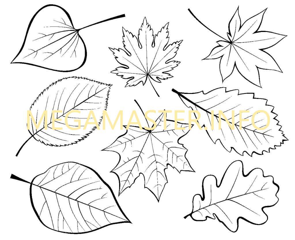 Шаблоны листьев деревьев