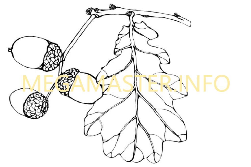 Шаблон дубового листика (2)