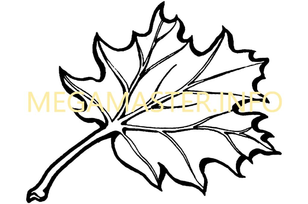 Шаблон кленового листа с прожилками