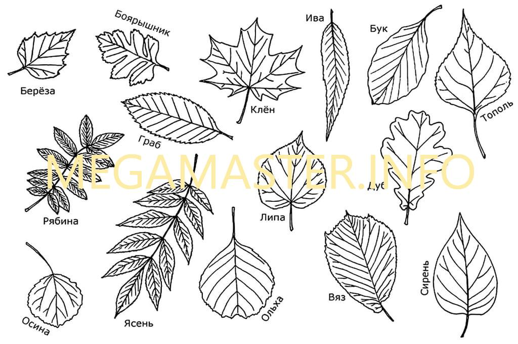 Шаблоны разных листьев для вырезания