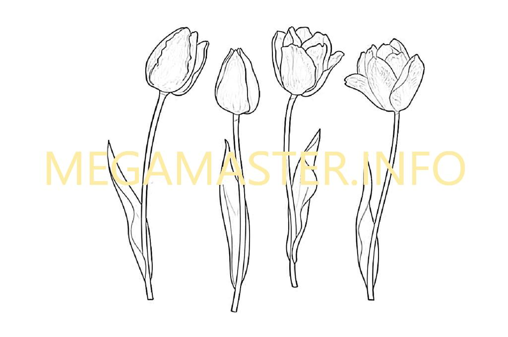 Трафарет тюльпана (2)