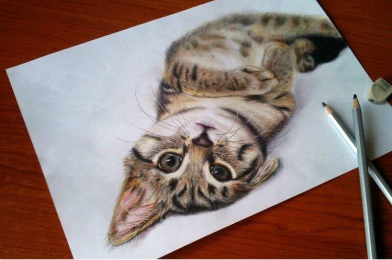 Как нарисовать кошку и кота поэтапно