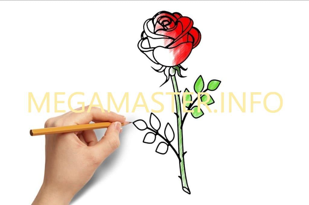 Рисуем розу поэтапно для начинающих