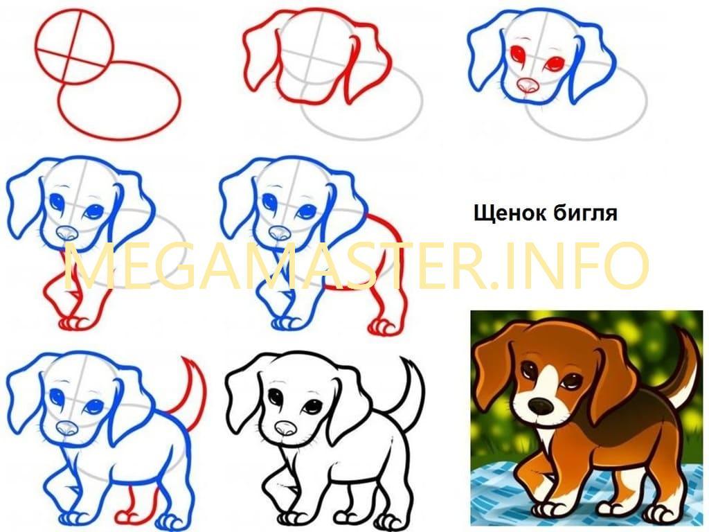 рисунки собак поэтапно для начинающих вкусу практически идентичен