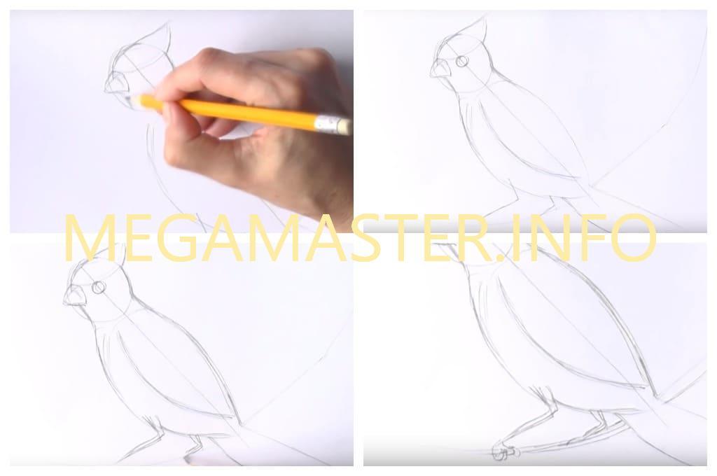 Птичка простым карандашом (Шаг 2)