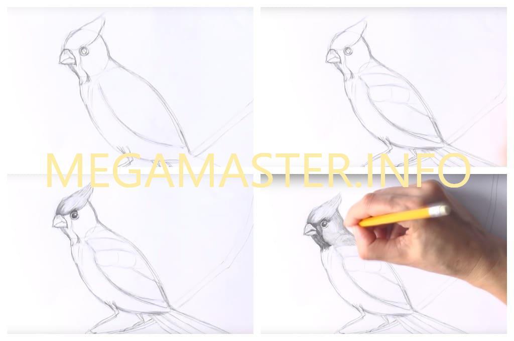 Птичка простым карандашом (Шаг 3)