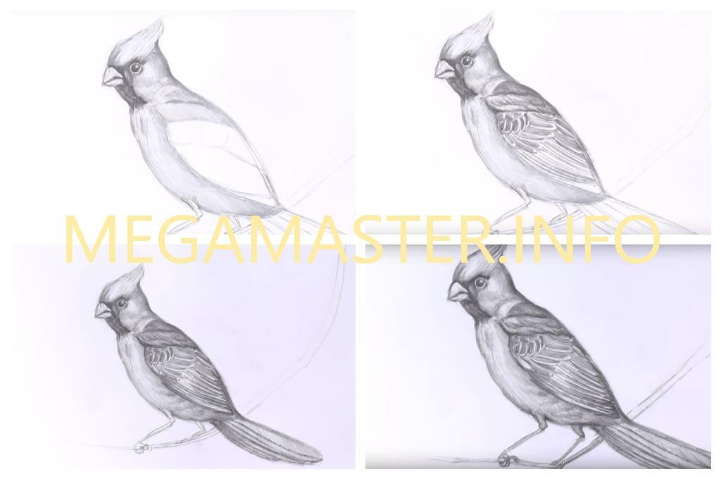 Птичка простым карандашом (Шаг 4)
