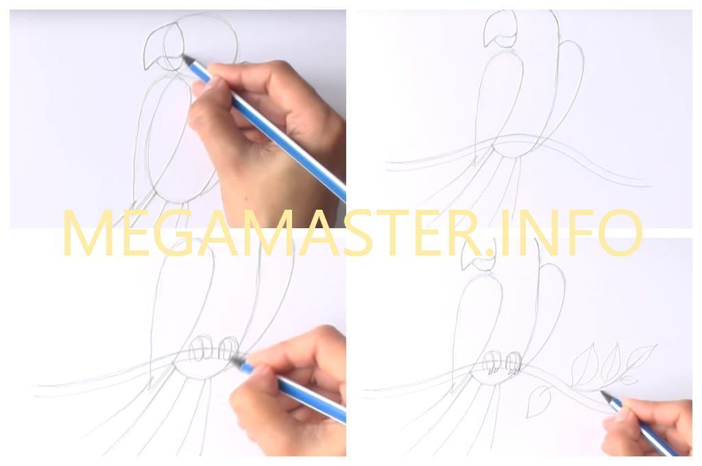Рисуем попугая фломастерами (Шаг 2)