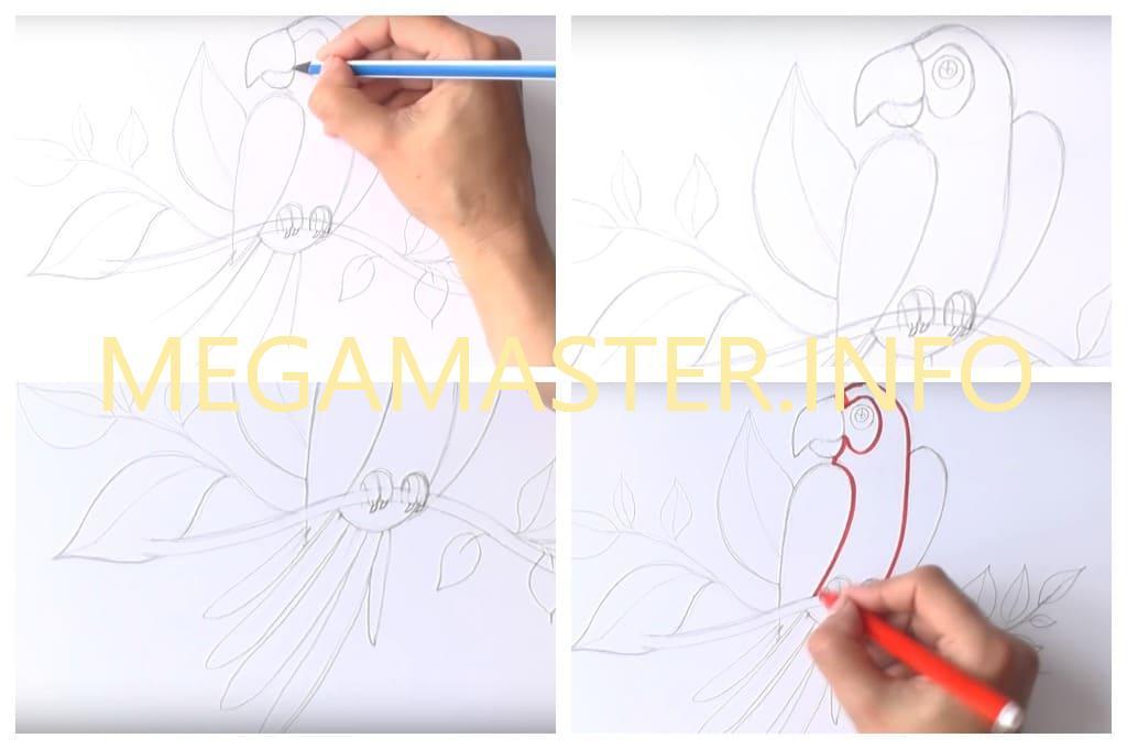 Рисуем попугая фломастерами (Шаг 3)