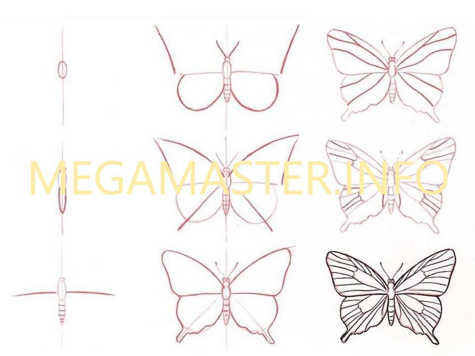 Рисуем бабочку карандашом пошагово