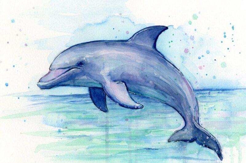 Как нарисовать дельфина поэтапно легко и просто