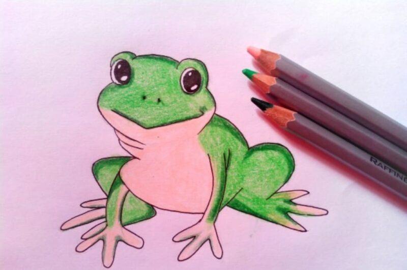 Как нарисовать лягушку карандашом поэтапно легко и просто