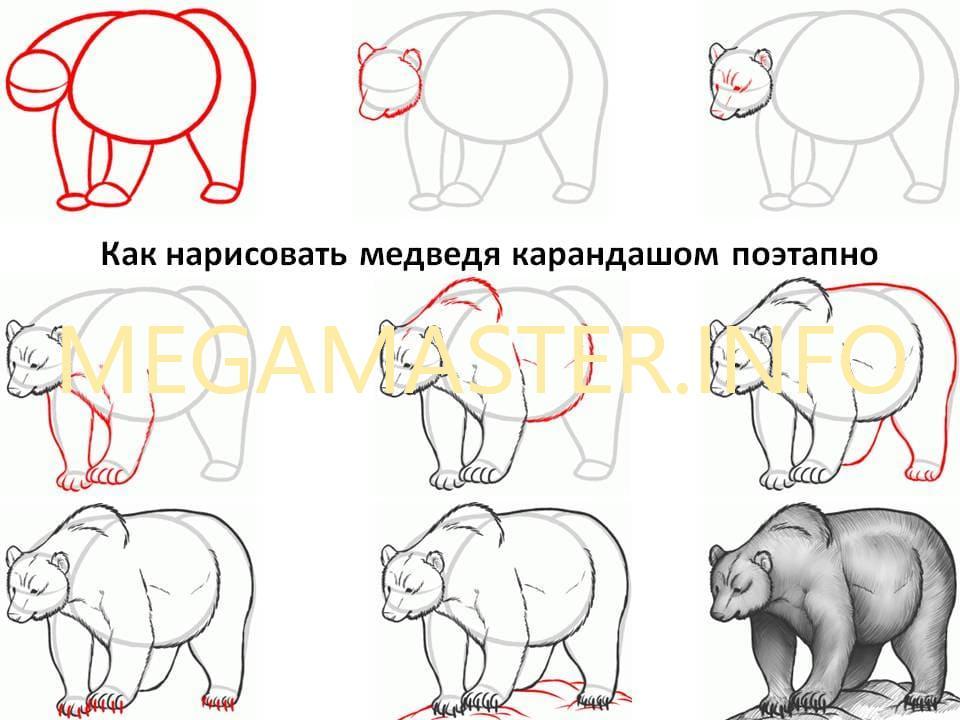 материал медвежата рисунок карандашом поэтапно собраны мемы шутки