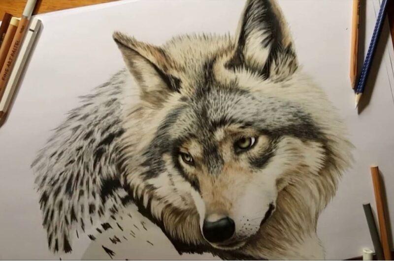 Как нарисовать волка карандашом поэтапно для начинающих