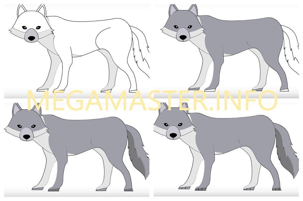 командорские рисунки поэтапно животные волк того
