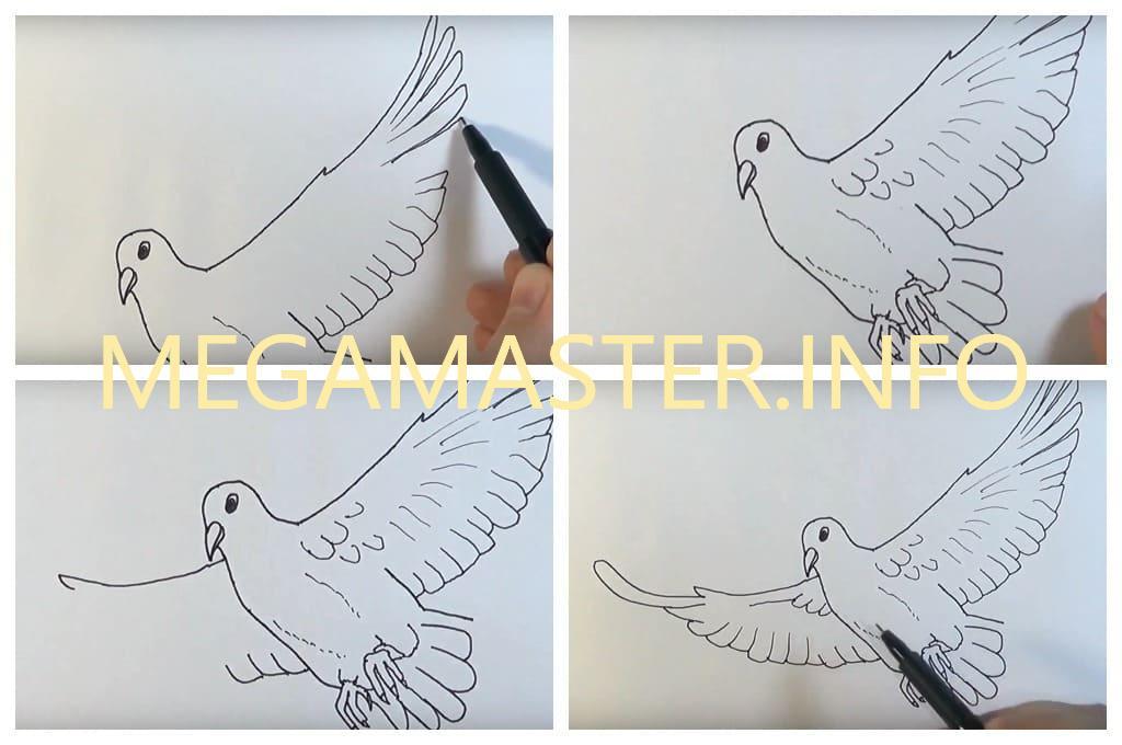 Рисунок голубь (Шаг 3)