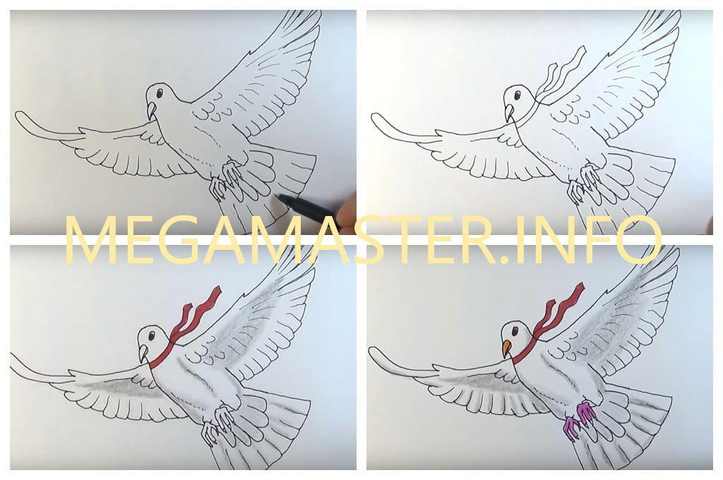 рисунок голубь (Шаг 4)