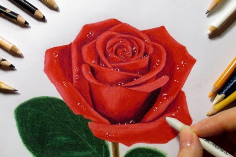Как нарисовать цветок красиво и легко пошагово