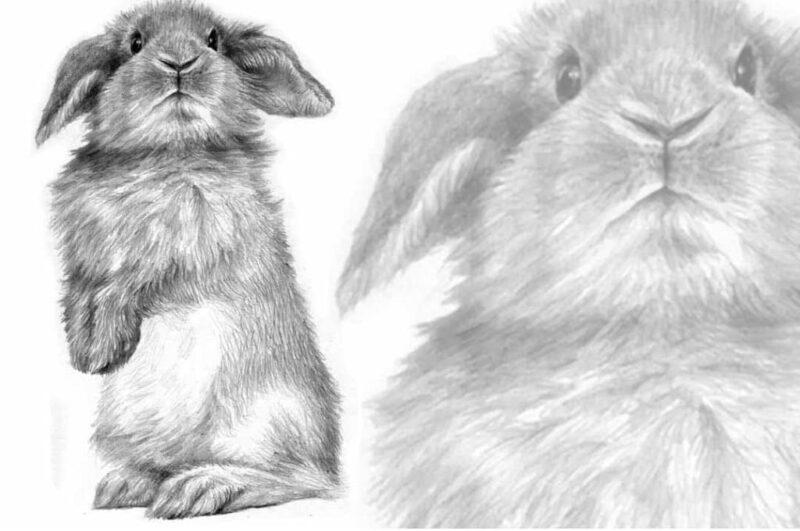 Как нарисовать кролика поэтапно легко и просто карандашом