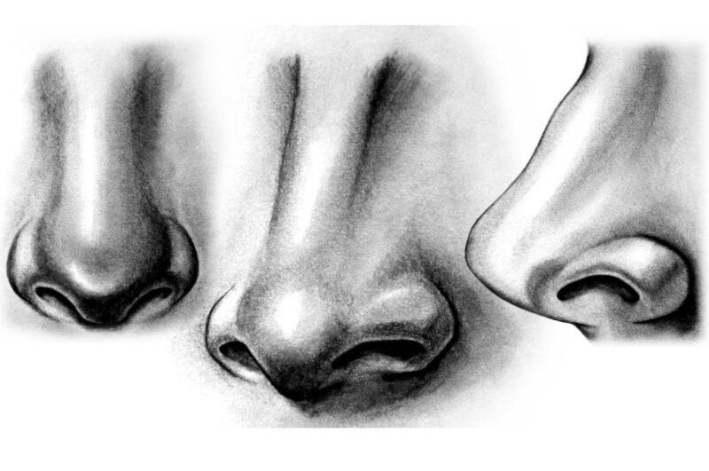 Как нарисовать нос человека карандашом просто пошагово