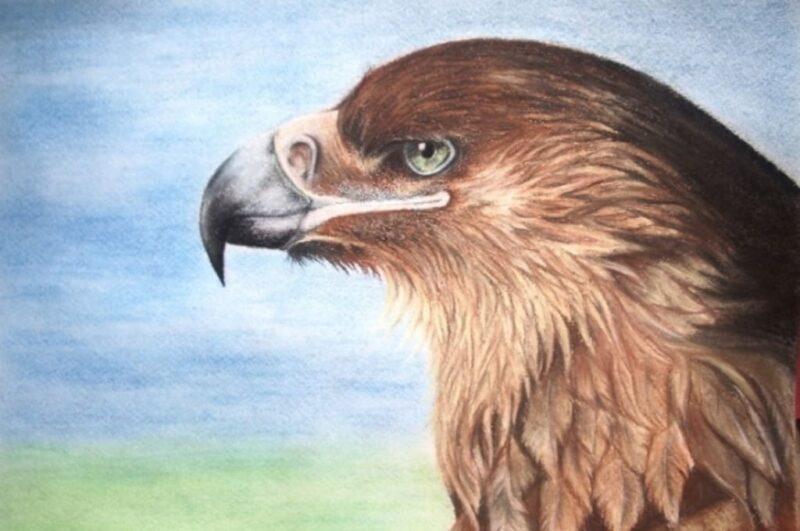 Как нарисовать орла поэтапно карандашом