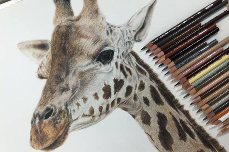 Как нарисовать жирафа карандашом поэтапно для детей