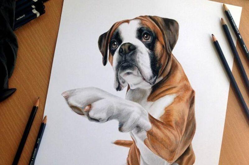 Как нарисовать животных поэтапно карандашом для начинающих