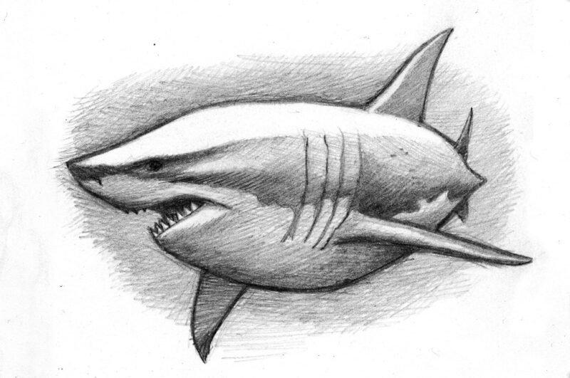 Как нарисовать акулу