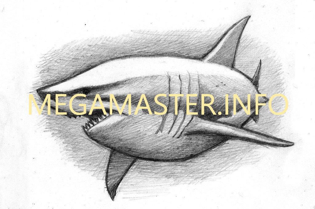 картинки как нарисовать акулу карандашом поэтапно без хлопот