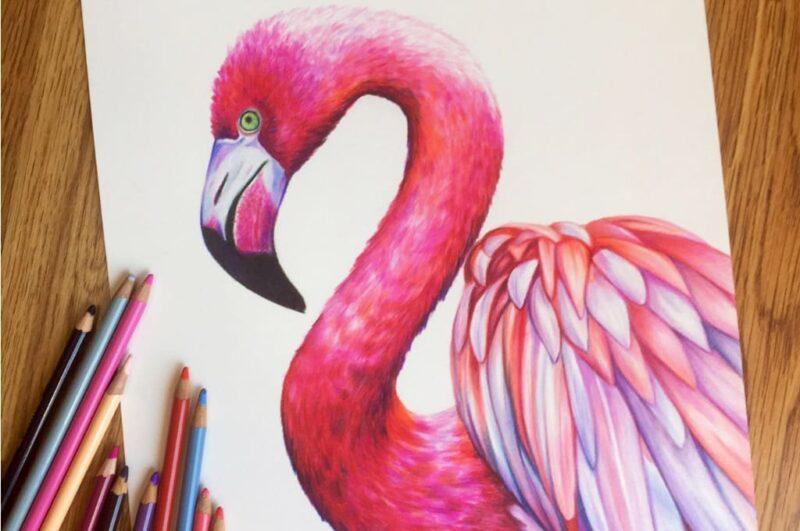 Как нарисовать фламинго поэтапно для начинающих