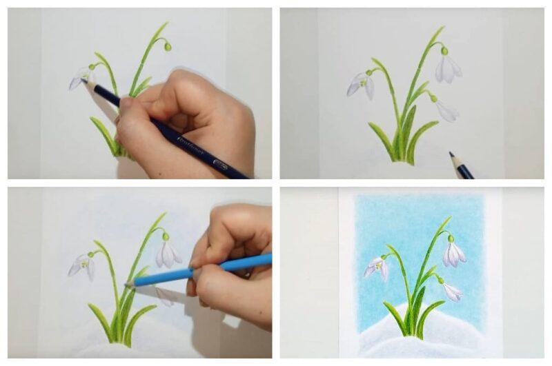 Красивый подснежник цветными карандашами (Шаг 3)