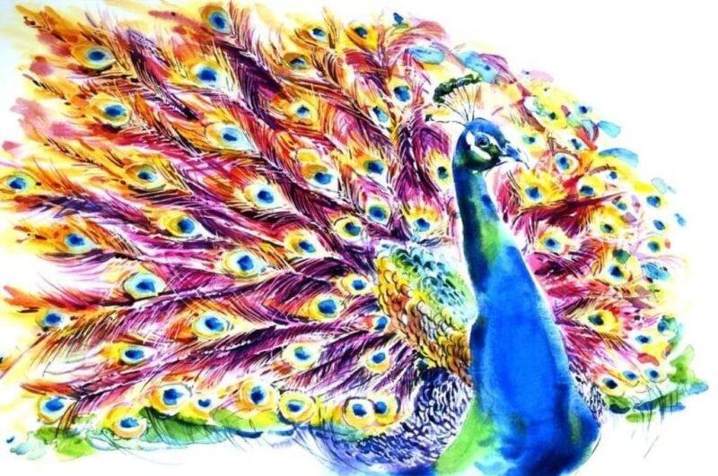 Как нарисовать павлина с раскрытым хвостом