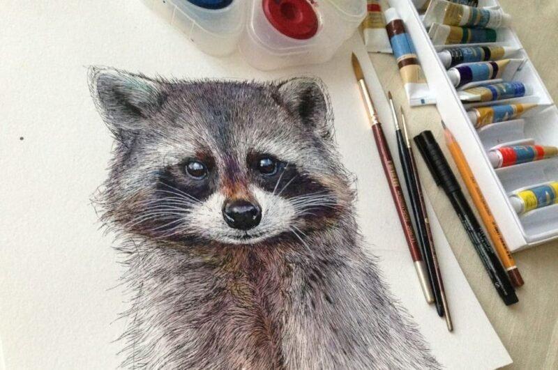 Как нарисовать енота карандашом поэтапно