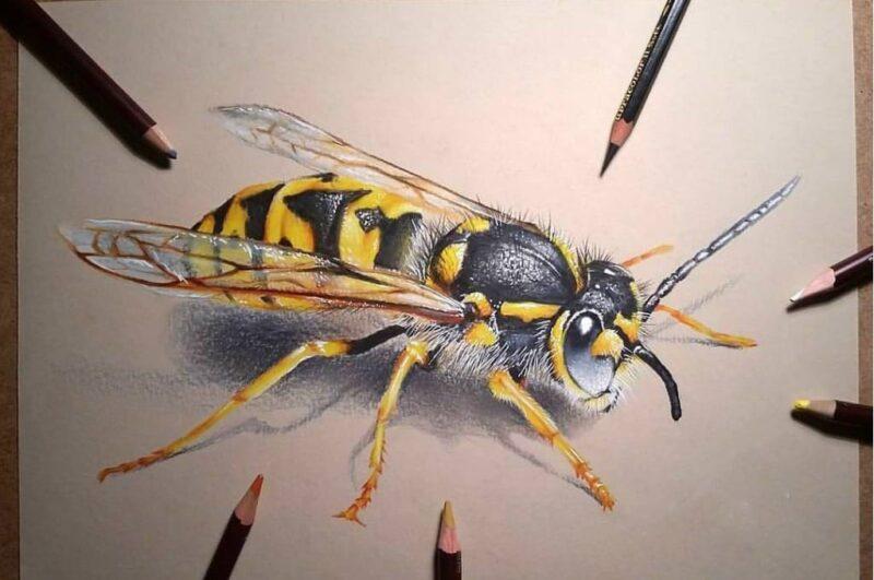 Как нарисовать пчелу поэтапно разными способами