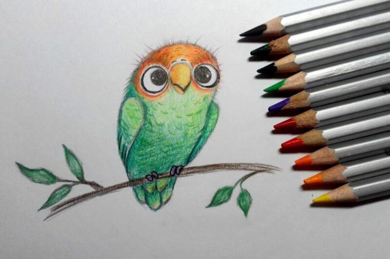 Как нарисовать попугая карандашом поэтапно для детей