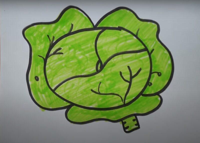 Как нарисовать капусту поэтапно?