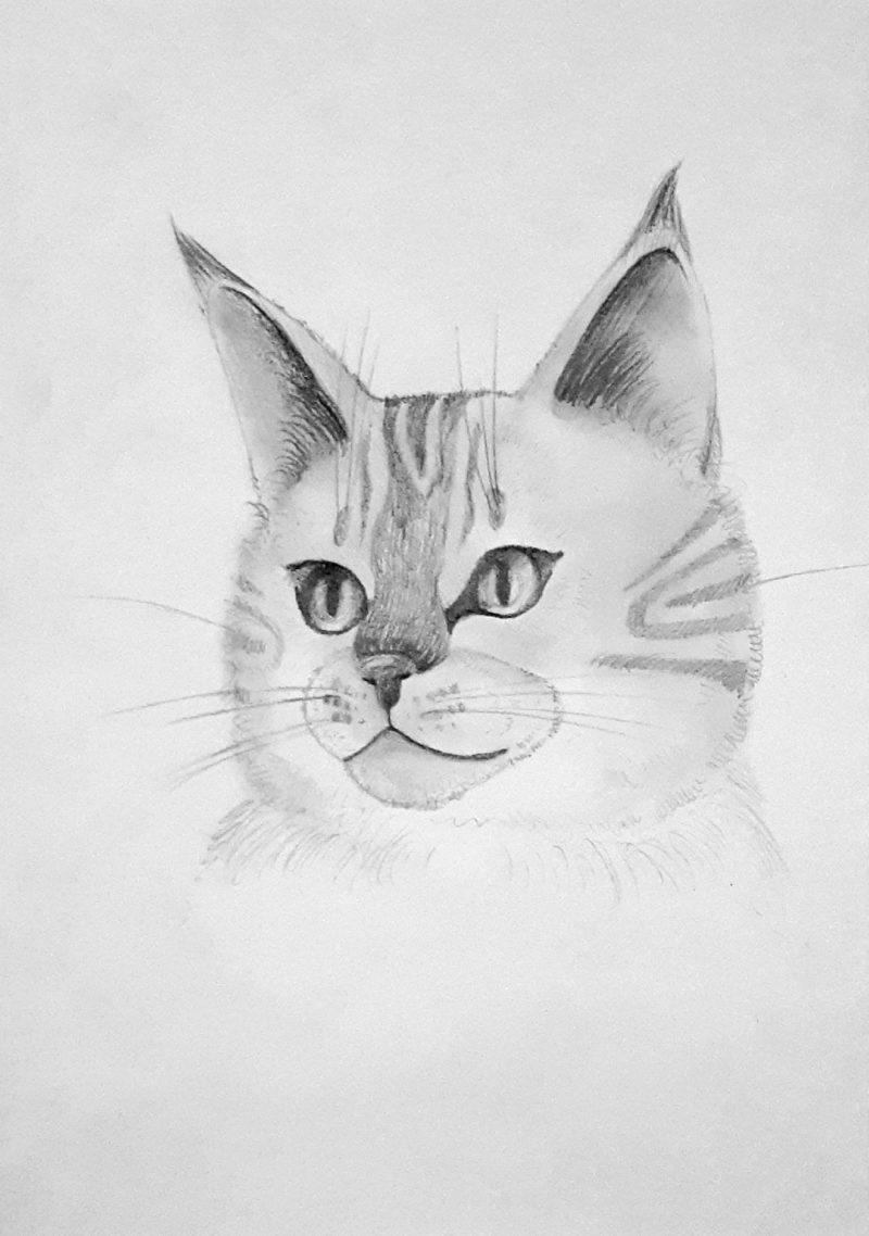 Как нарисовать кошку простым карандашом
